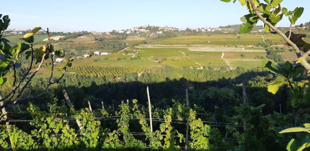 foto2-1024x498 Sulle strade del Dogliani, vino e cibo di qualità